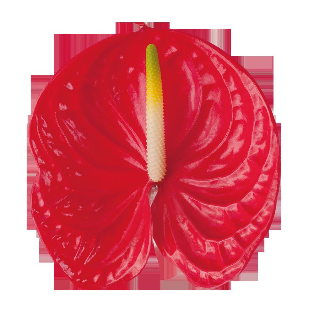 arena_kwiat