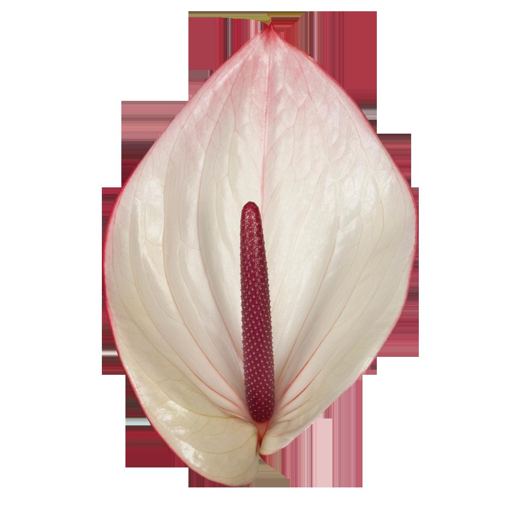 facetto_kwiat