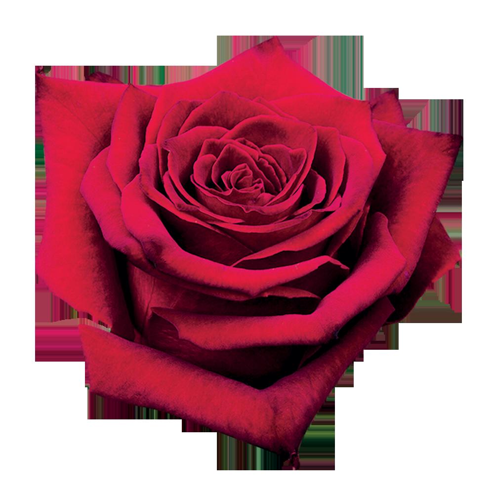 grand_prix_roza