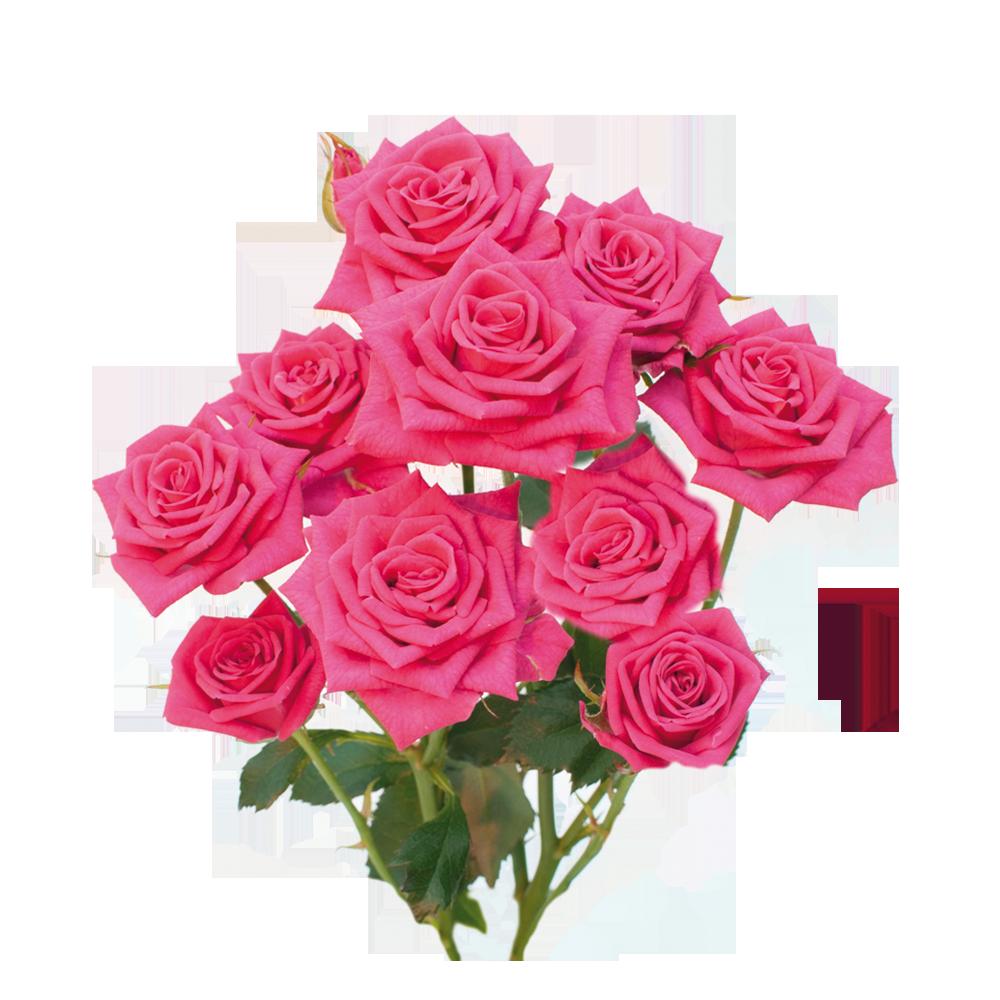 pink_yoyo_roza