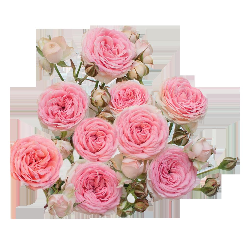 roze_kate_lynn