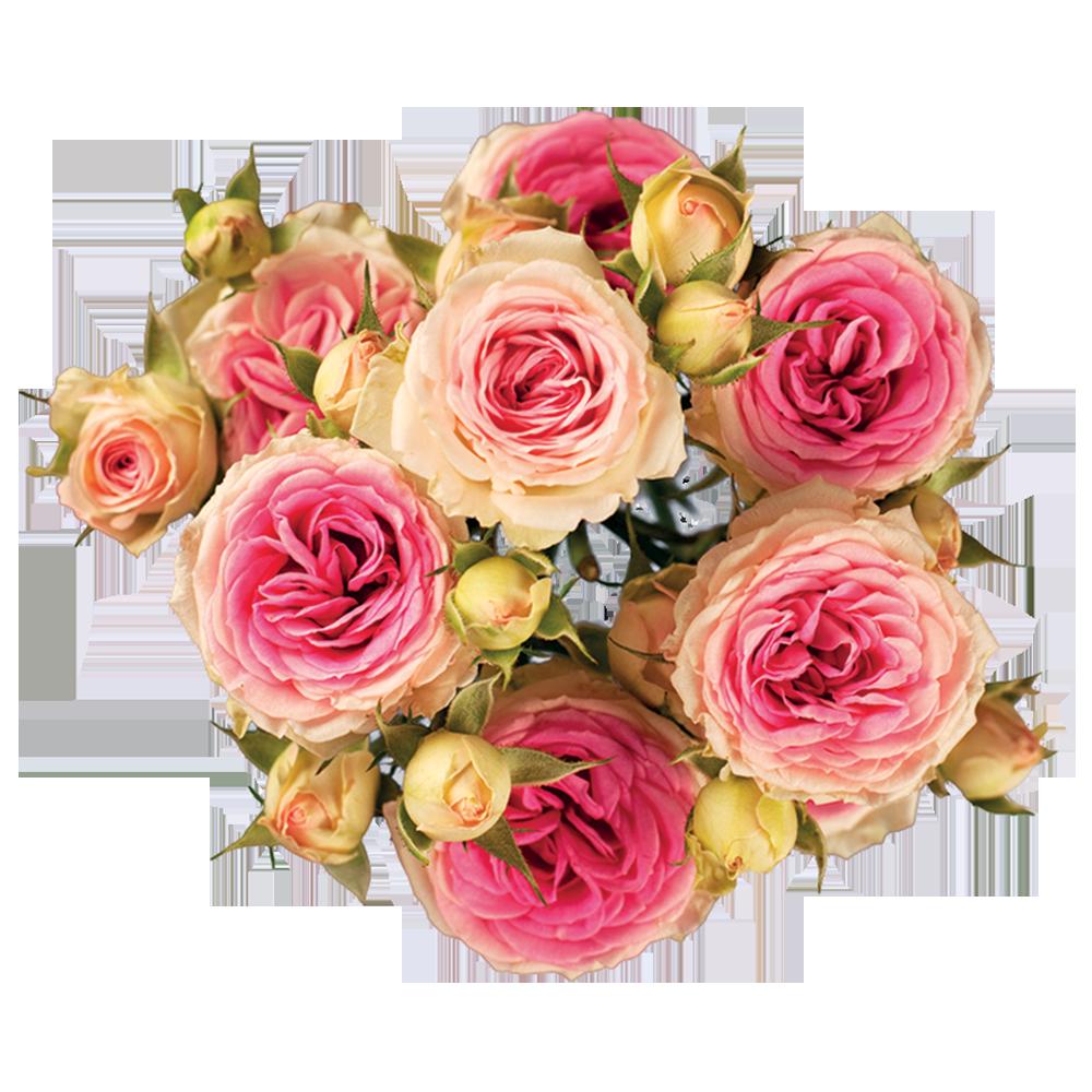 roze_mimi_eden