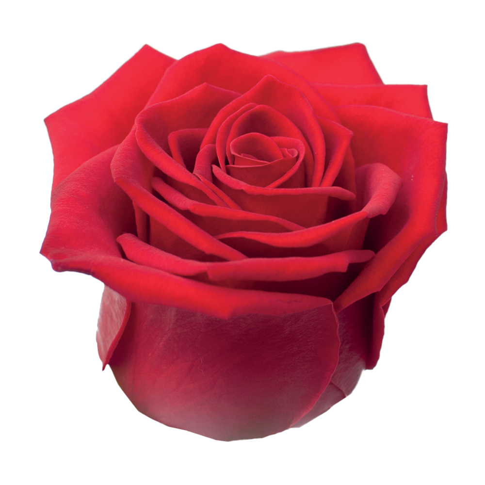 roze_red_eagle