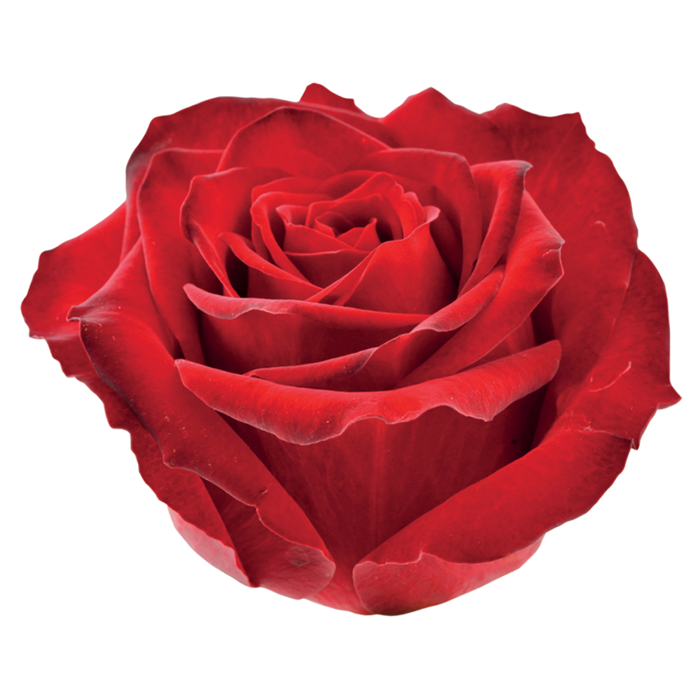 roze_red_knight