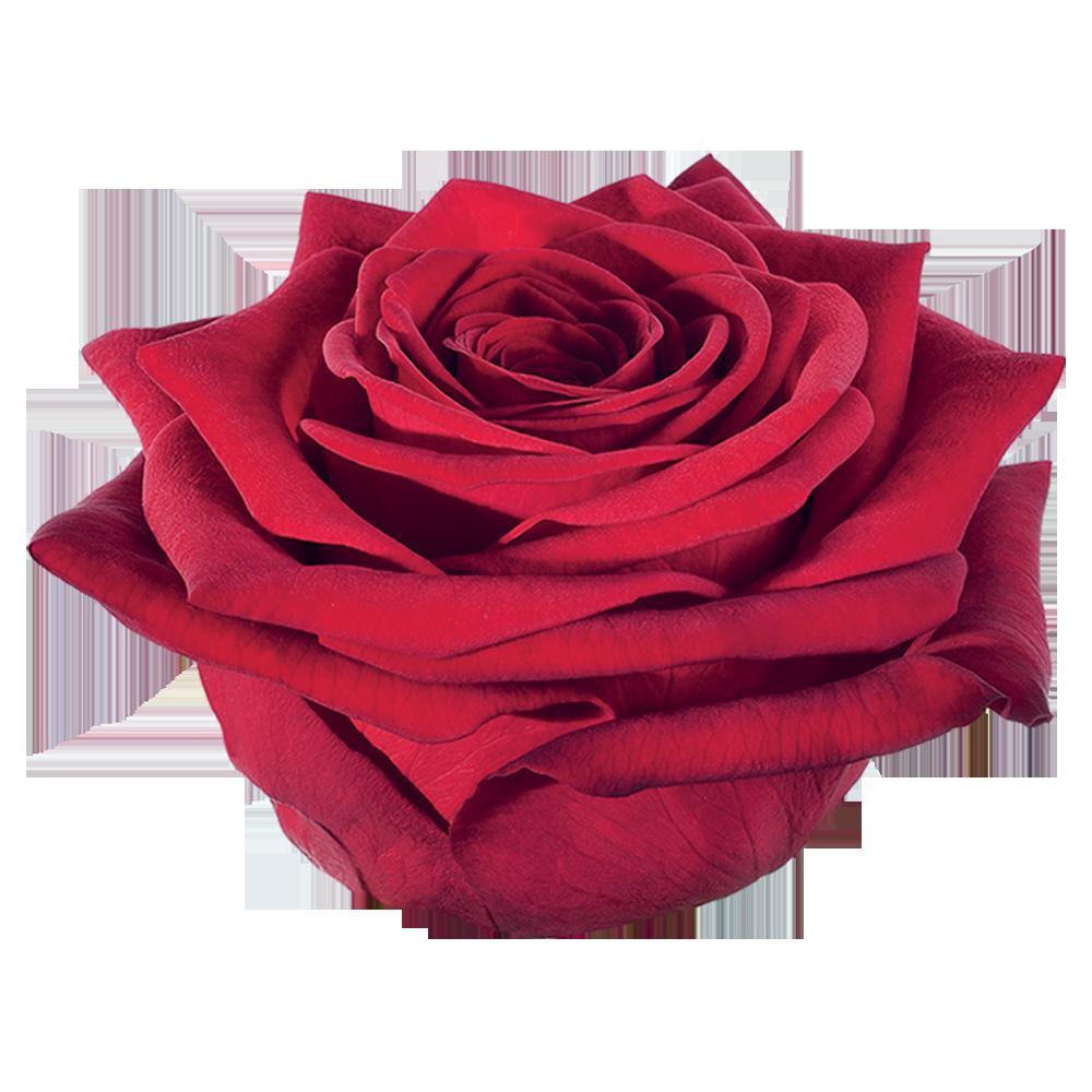 roze_red_naomi