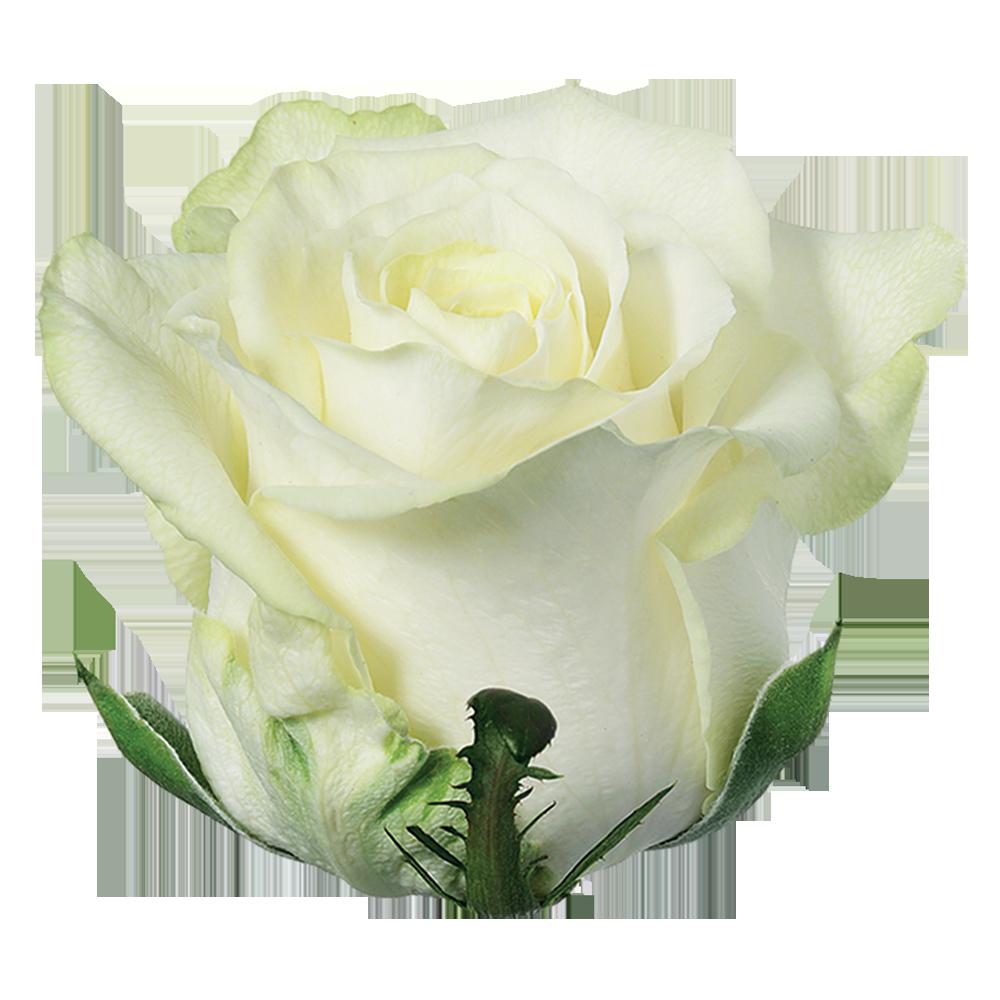 roze_white_naomi