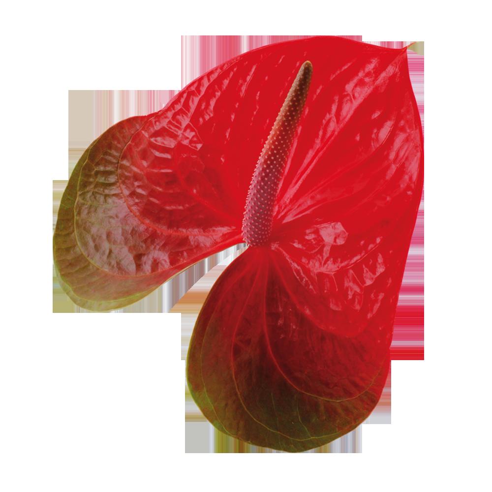 spice_kwiat