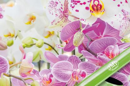 Kwiaty do domu bezpieczeństwo dla Twojego dziecka