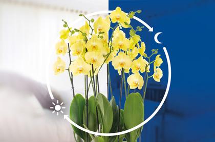 Orchidea - Naturalny oczyszczacz powietrza